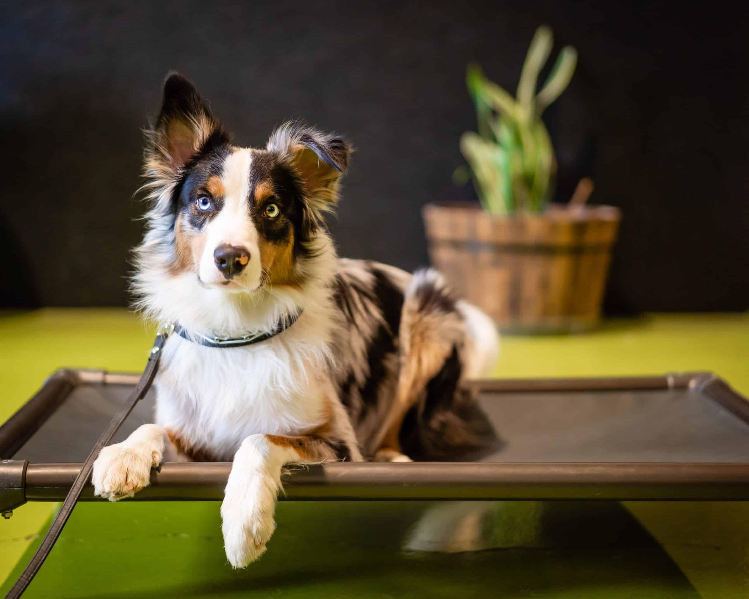 Redmond-Oregon-Dog-Training-Facility