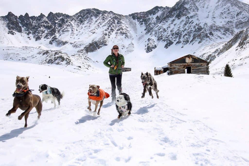 Dog-Training-Idaho-Springs-Colorado