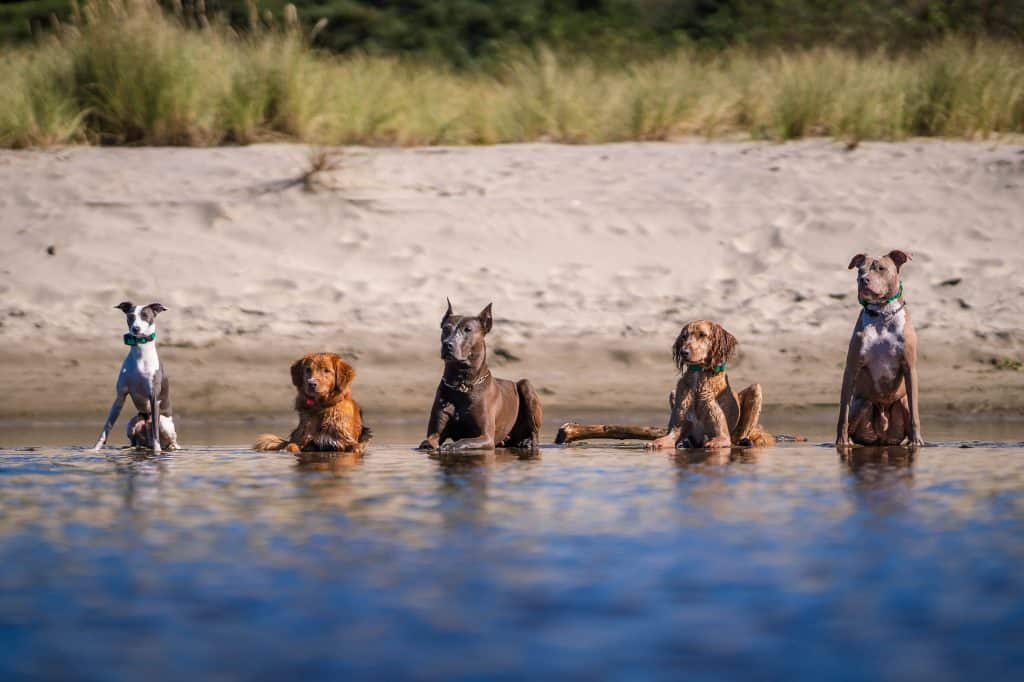 Dog-Training-Newport-Oregon